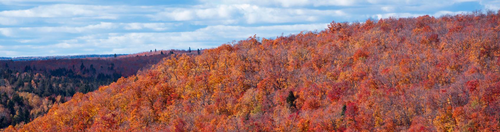 Quetico-Autumn