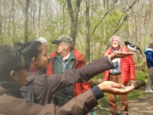 Abigail, a hiker and canoeist, had a first-hand experience and chance to feed a rose-breasted grosbeak, Quetico Foundation Canoe Day,  Royal Botanical Gardens, May 13 2017, Credit: Noah Cole   This event supports Quetico Foundation's Ridley Wilderness Youth Program, providing young leaders from across the Toronto District School Board with a wilderness canoe trip experience in Quetico Park.   Learn more about the Quetico Foundation and the Ridley Wilderness Youth Program: http://queticofoundation.org/what-we-do/programs/