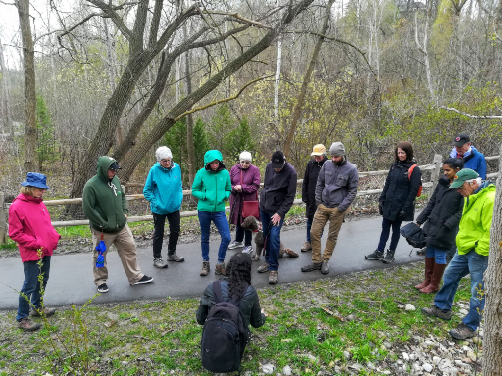 Learning about spring vegetation and wild edible plants in the Don Valley along the Evergreen Brickworks area trails. Credit: Mikaela Manley