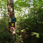 Figure 2. Song meter at a plot in conditions typical of Ecosite B055 (Aspen – Birch Hardwood) – Quetico Provincial Park. Photo credit: Jared Walter Stachiw